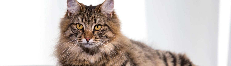 Prins kucing header vitalcare