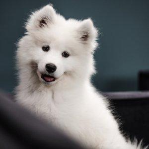jakartapetfoods.com PRINS puppy home