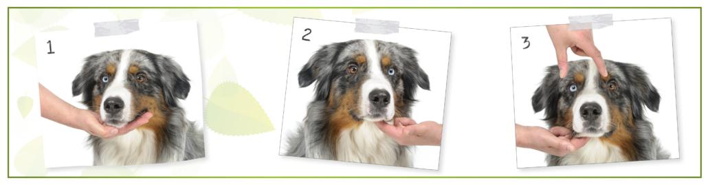 kesehatan anjing - Check your dog's mouth 1
