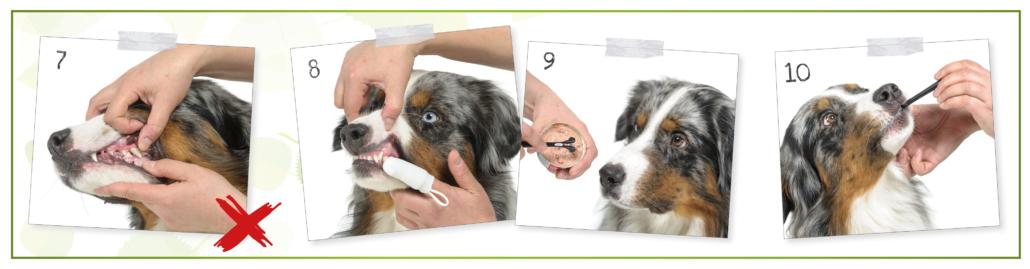 kesehatan anjing - Check your dog's mouth 3