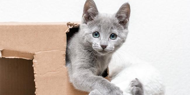 seni pet foto memotret anak kucing ciluk bah