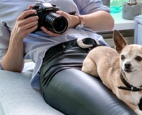 foto pet anjing kucing - sayang Prins Indonesia