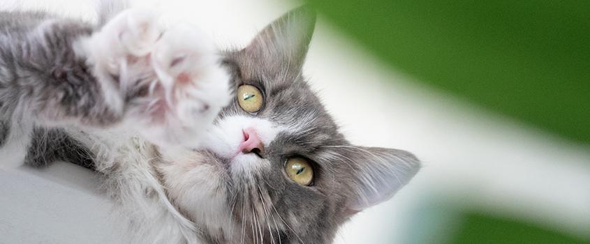 pet foto memotret kucing - Prins 4 Indonesia