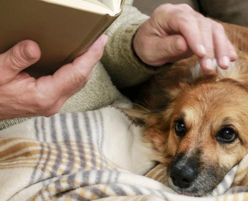 Berita Belanda - article Prins Petfoods Pet Parents Plan