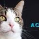 melihara kucing - Prins Cat Academy the Netherlands