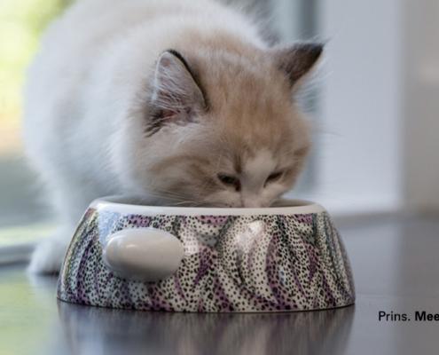 Delicious Cat food