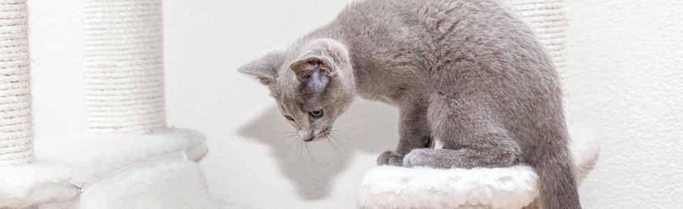jakartapetfoods article kitten