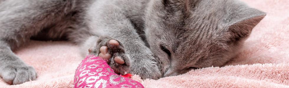 jakartapetfoods article kitten sleep