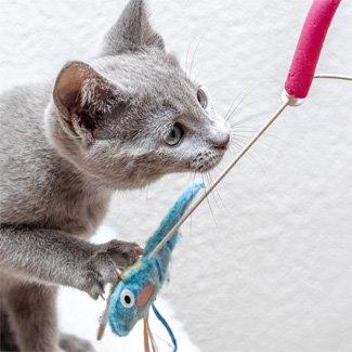 jakartapetfoods article kitten play