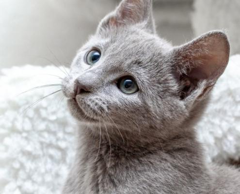 jakartapetfoods article kitten header