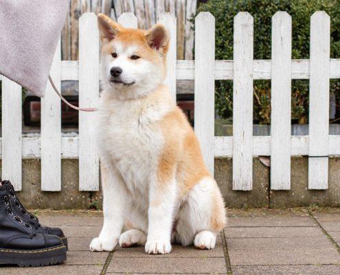 Prins Petfoods pup tips header