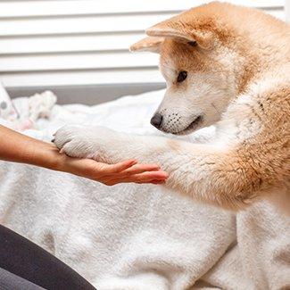 Prins Petfoods pup training