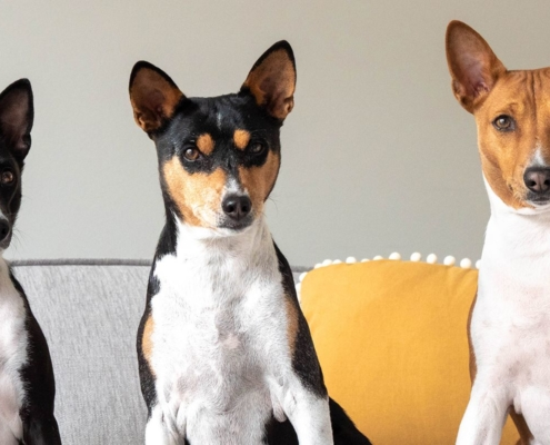 Puberty in dogs - tips in dealing with your adolescent dog - Prins Indonesia - jakartapetfoods