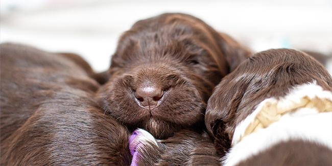 Sleeping puppies - Prins Indonesia - jakartapetfoods